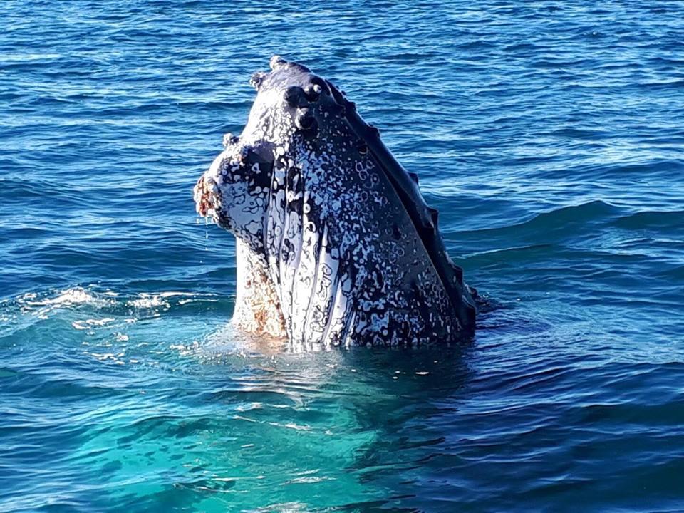 Blue Bay Whale Watching Byron Bay - Spy Hop