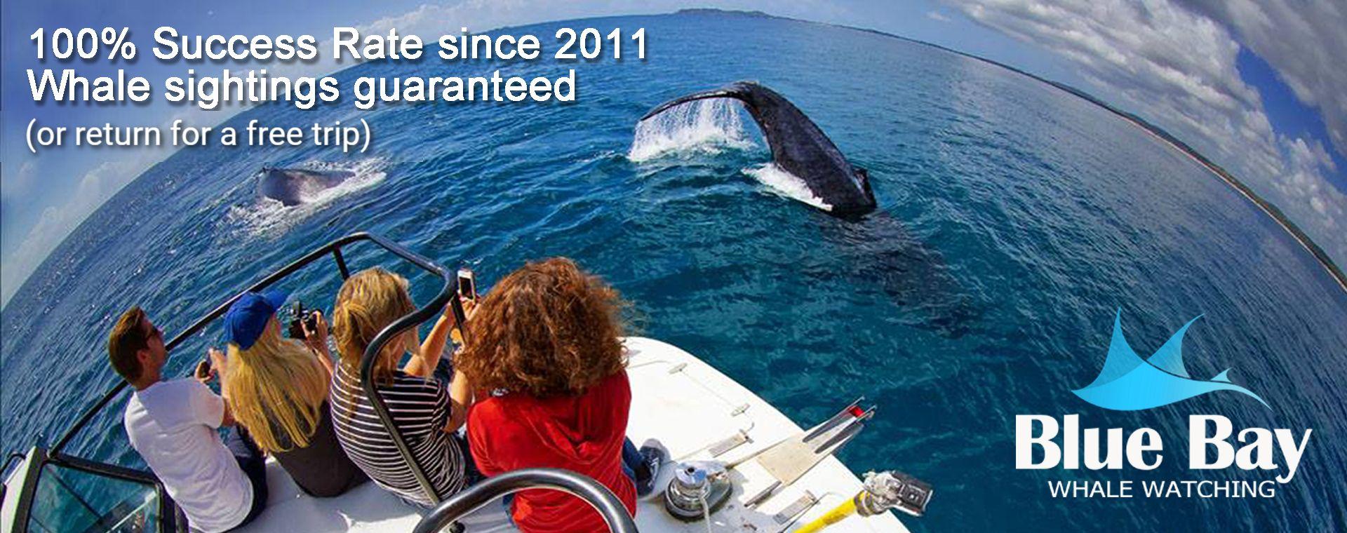 Whale Guarantee