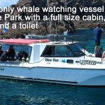 Blue Bay Whale Watching Byron Bay - Bay Warrior
